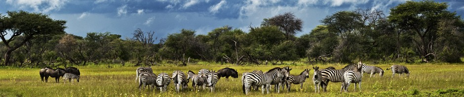 Panorama of a storm approaching the Hwange National Park in Zimbabwe